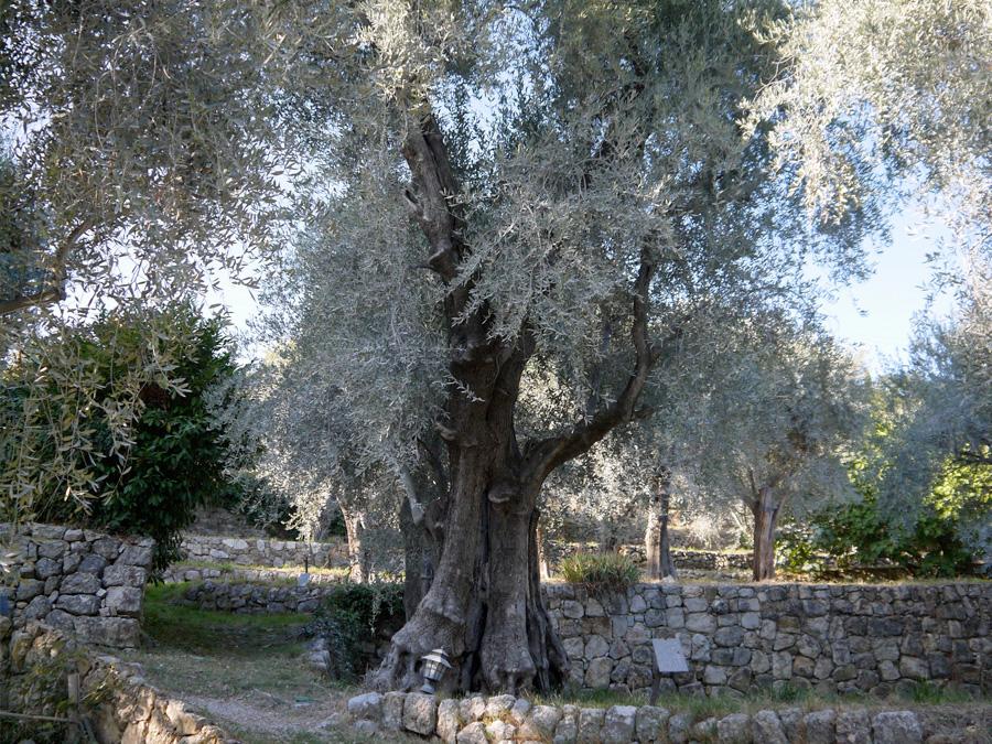 Tour huile d'olive Côte d'Azur